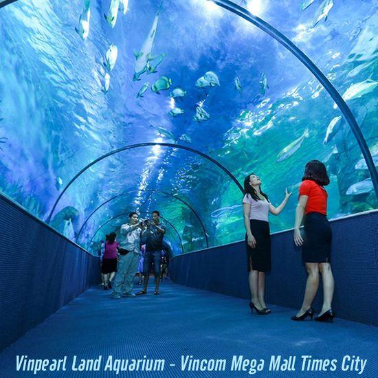 Vé tham quan thủy cung Vinpearl Land người lớn