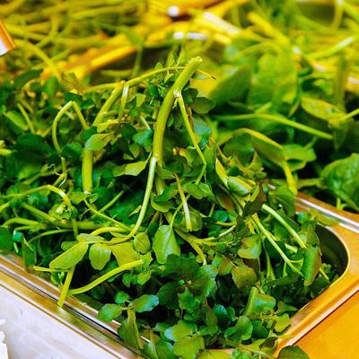 Nhiều loại rau đặc biệt mang lại điều mới lạ