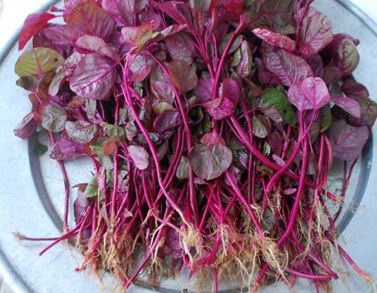 cb 3 gói hạt giống rau rền đỏ