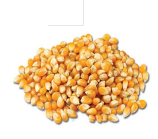 Ngô hạt nổ 10kg