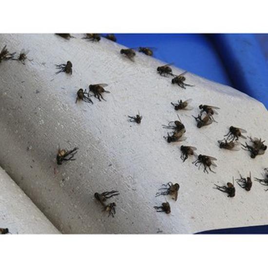 Bộ 10 tấm keo dính ruồi siêu dính