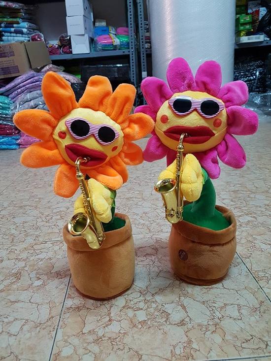Hoa hướng dương uốn éo 60 bài hát màu Hồng