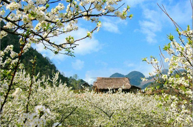 Khám phá mùa hoa cải trắng Mai Châu - Mộc Châu 2N1Đ