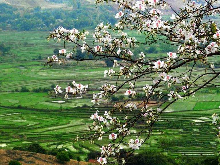 Mai Châu - Mộc Châu các mùa hoa 2N1Đ